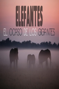 Elephants, the twilight of the giants