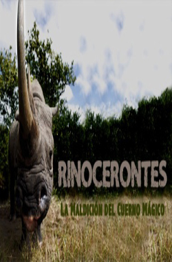 Rhinoceroses, the curse of the magic horn